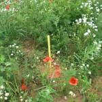 Hier noch so einer, mitten im Garten - hat jemand eine Idee wofür?