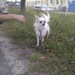Ein kleiner herrenloser Hund, der herumstreunerte - wohin der wohl gehört?