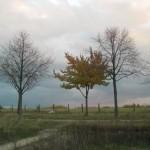 Dieser Baum trägt im Gegensatz zu den anderen noch fast seine komplette Blätterpracht - erstaunlich.