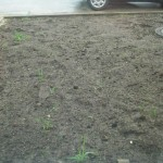 Im Mutterboden vor dem Haus beginnt es bereits auf natürlichem Wege zu wuchern