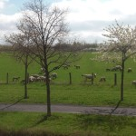 Könnten sich ja die Schafe, die seit ein paar Tagen vor dem Haus weiden, drum kümmern... ;-)