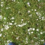 Durchlöcherter Rasen