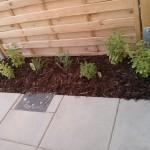 Mit (grobem) Rindenmulch ausgestattetes Beet - verhindert vor allem, dass bei starker Sonneneinstrahlung der Boden darunter zu schnell austrocknet