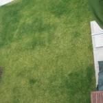 """""""Fleckige"""" Rasenfläche vor dem Düngen"""