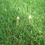 Pilzwachstum über Nacht - weiß jemand, was für Pilze das sind?