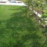 Rasen zu nah an der Hecke; Mähen beschwerlich
