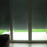 Wegen frischer Farbe angekippte Fenster geschützt durch Rollladen