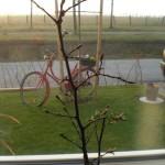 Hainbuchenheckenzüchtung auf der Küchenfensterbank. :-)