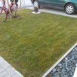 Gemäht sieht der Rasen gleich viel schöner aus