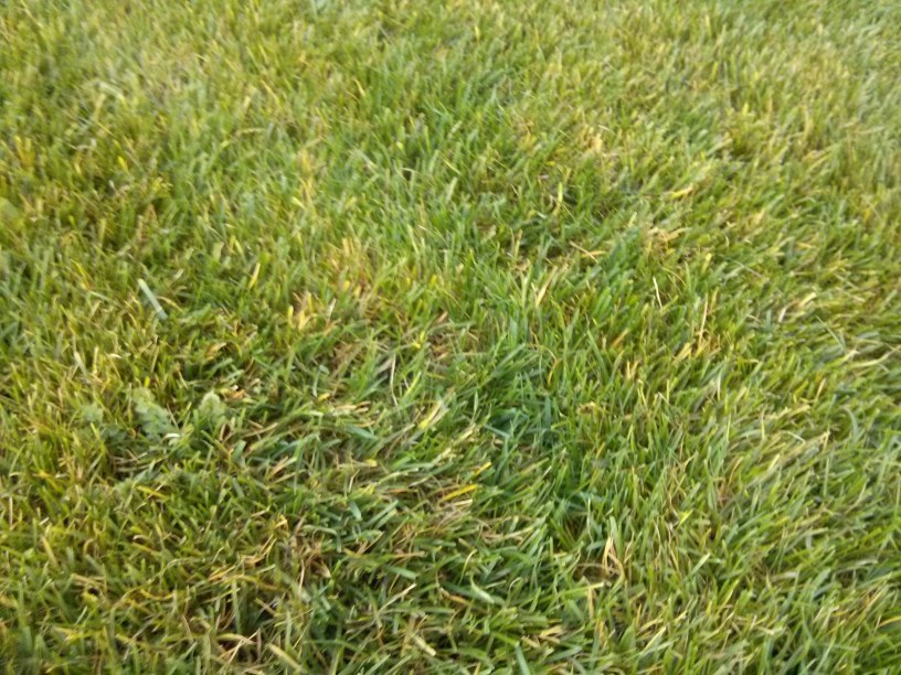 Frühlingsanfang = Erstmals Rasenmähen und mehr