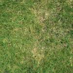 An manchen Stellen sieht der Rasen von oben auch auf den ersten Blick gelb aus
