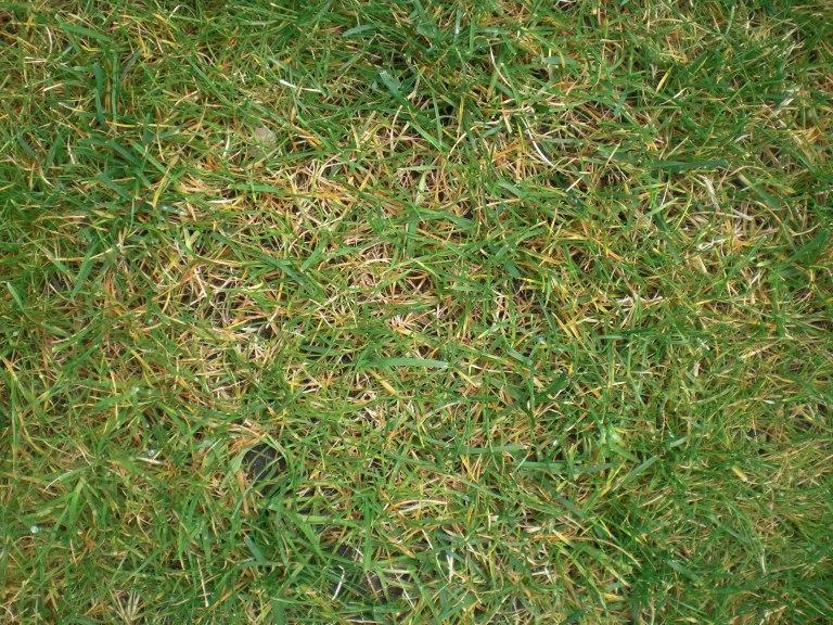 Emejing Rasen Wird Gelb Images - Kosherelsalvador.com ...