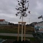 Mit weißem Schutzanstrich versehener Baum